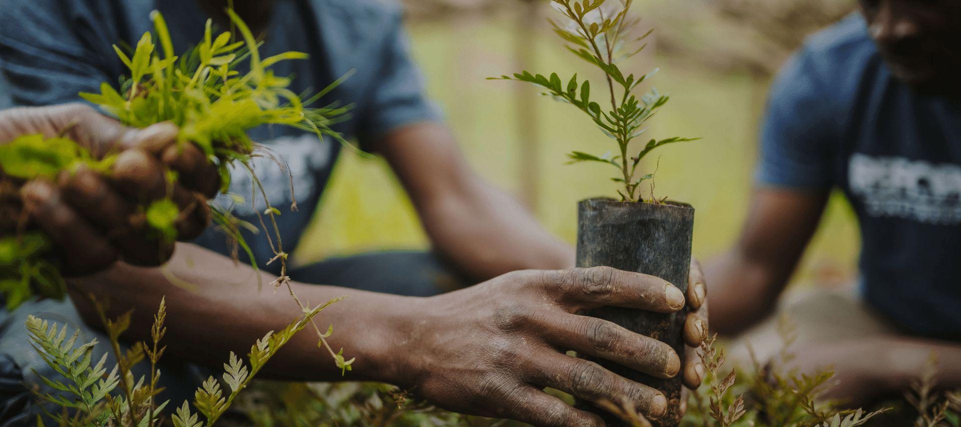 planter l'arbre