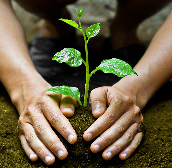 Associer mes produits et services à des arbres