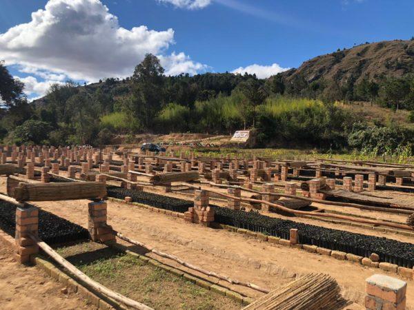 Les chantiers de la pépinière Bôndy